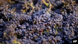 美國加州葡萄園2014年有用毒死蜱(Chlorpyrifos)危險殺蟲劑。