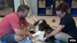 '바이오닉펫츠(Bionic Pets)'의 창업자 데릭 캄파나 씨가 장애견의 다리에 의족을 끼우고 있다.