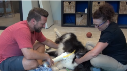 [구석구석 미국 이야기 오디오] 동물을 위한 의족 보조기...장애 아동을 위한 놀이터