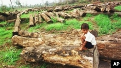 Experts say as little as 30 percent of the country's forest cover remains, while logging continues to be a problem, file photo.