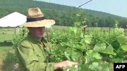 Vinar Sebastijan Marke proverava vinograd u svojoj vinariji u Virdžiniji