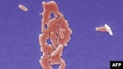 Бактерия Salmonella typhimurium