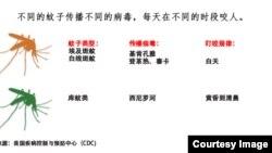 不同的蚊子传播不同的病毒(包括寨卡) 每天在不同的时段咬人 (美国疾病控制与预防中心)