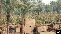 گلوله باری پولیس مصر بر مهاجرین سودانی