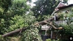 Ένα μεγάλο δέντρο κτύπησε την κατοικία του Πρέσβη της Ελλάδας στην Ουάσιγκτον