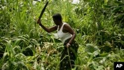A Angolan woman cuts maize at Lombolombo neighborhood in Cabinda January 24, 2010. REUTERS/Rafael Marchante