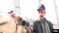 Abdel Maksoud, vodič