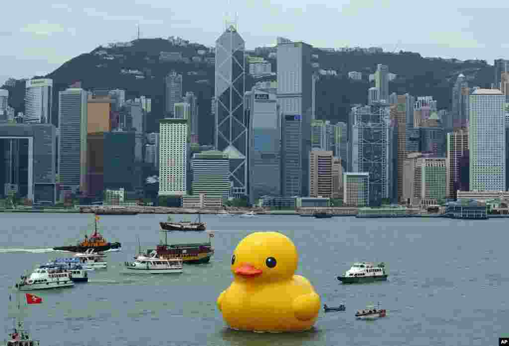 A giant Rubber Duck created by Dutch artist Florentijn Hofman is towed along Hong Kong's Victoria Habor. Since 2007 the 16.5-meter (54-foot)-tall Rubber Duck has traveled to various cites including Osaka, Sydney, Sao Paulo and Amsterdam.
