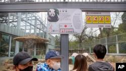 新冠病毒爆发以来,北京动物园首次对公众开放户外展区。戴口罩的游客参观了北京动物园的大熊猫。虽然北京大多数的旅游景点仍保持关闭,但动物园和长城部分地区在按预约接待游客。一些餐馆开始重新营业。(美联社照片)