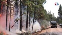 Persisten las llamas en el incendio forestal mas grande de EE. UU.