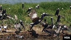 Los científicos y ambientalistas están evaluando el impacto a largo plazo sobre la vida silvestre en la región.