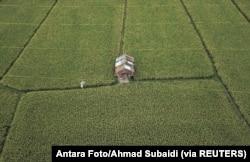 Pandangan udara menunjukkan sawah, 21 Oktober 2018. (Foto: Antara/Ahmad Subaidi via Reuters)