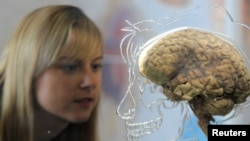 """Teenager, meet a brain. Brain, meet a teenager."" (REUTERS/FILE PHOTO)"