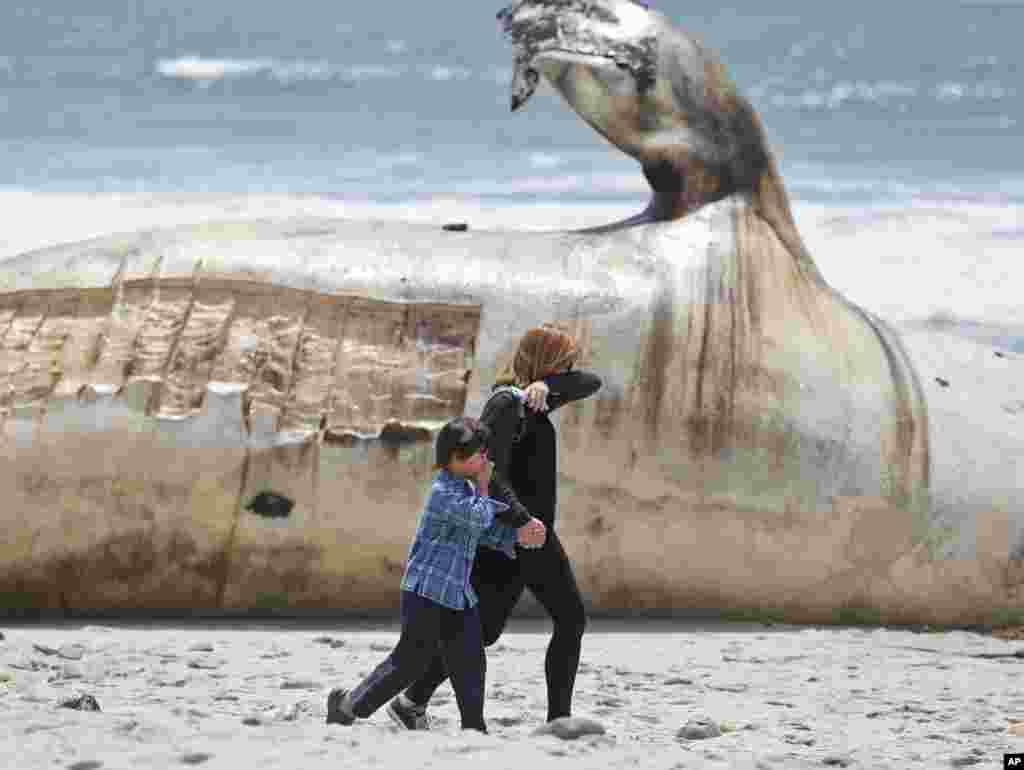 ស្ត្រី និងកុមារាគ្របច្រមុះរបស់ពួកគេ នៅស្របពេលដែលពួកគេដើរកាត់សាកសពត្រីបាឡែនមួយនៅឯកន្លែងជិះកា្តរលើរលកដ៏ល្បីមួយនៅក្រុង San Clemente រដ្ឋ California កាលពីថ្ងៃទី២៦ ខែមេសា ឆ្នាំ២០១៦។