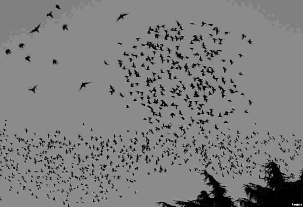 فضا میں اڑتے پرندوں کے جُھنڈ کی تصاویر
