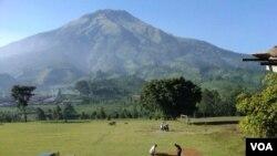 Daerah pedesaan di Temanggung, Jawa Tengah. (Foto: Dok)