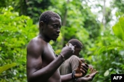 A Pygmy man from the Bagyeli tribe shows plants used for the traditional treatment of malaria, May 26, 2017 in the Kribi region of Cameroon.