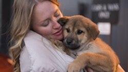 미국인이 전하는 미국이야기: 애완동물 사랑
