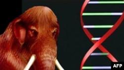 Pokušaj kloniranja mamuta