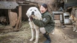 南韓總統擬禁狗肉 動保人士籲中國3年內跟進