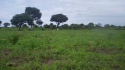 Procurador de Viana afastado devido a conflicto de terras -2:03