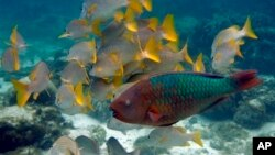 Many fish and other marine life are migrating toward cooler waters because of climate change.
