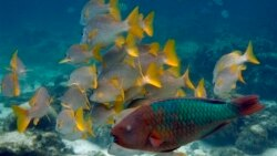 Cooperating With Cuba On Marine Conservation