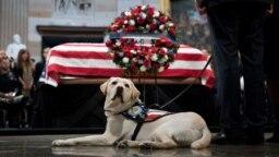 Sully bên linh cữu của ông Bush tại Quốc hội Mỹ hôm 4/12.