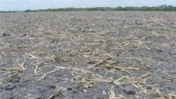 US Drought Linked to Climate Change
