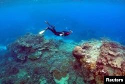 """Područje nazvano """"Koralni vrtovi"""" u blizini ostrva Lady Elliot, na Velikom koralnom grebenu, u blizini Queenslanda, Australija."""