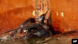 Vụ tràn dầu của công ty BP cách đây 6 năm ảnh hưởng nghiêm trọng đến môi trường.
