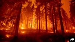 کیلی فورنیا کے جنگلات میں آگ سے درخت اور جھاڑیاں تیزی سے جل رہی ہیں اور آبادیوں کے لیے خطرات مسلسل بڑھتے جا رہے ہیں۔ 17 اگست 2021