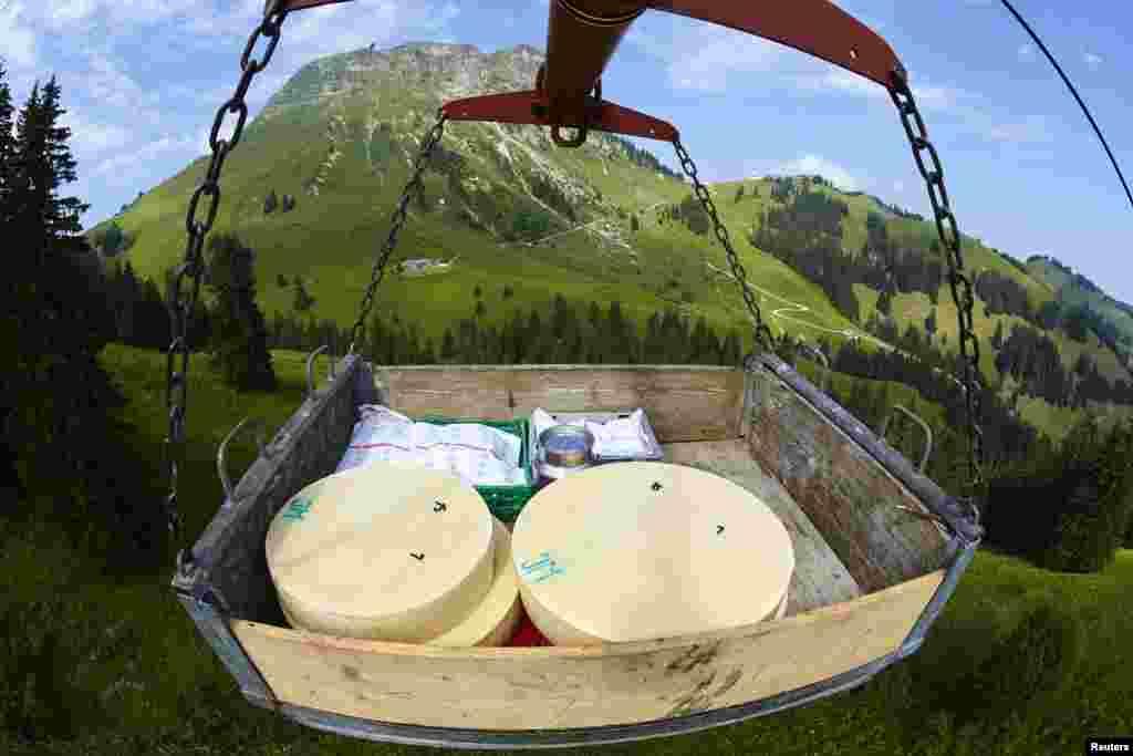 پہیے کی شکل والا پنیر کا ہر ٹکڑا 25 سے 40 کلوگرام وزنی ہوتا ہے اور ہر سال ایسے تقریباً 200 پہیے تیار کیے جاتے ہیں۔