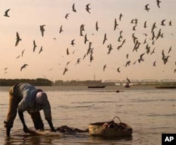 Fisherman on the White Nile (Morada). Khartoum, Sudan.