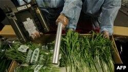 Các thanh tra thực phẩm Hồng Kông kiểm tra phóng xạ trong các loại rau nhập khẩu từ Nhật Bản
