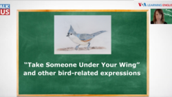 TALK2US: Bird Idioms