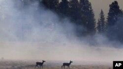 Аризона: изгореа 190.000 хектари, уништени 30-тина домови