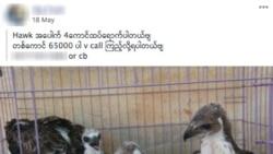 မြန်မာအပါအဝင် တောရိုင်းတိရစ္ဆာန် ရောင်းတဲ့ကြော်ငြာတွေ Facebook ဖယ်ရှား