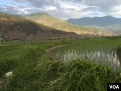 Bhutan đang đối mặt với khủng hoảng lao động ở nông thôn khi những thanh niên trẻ muốn cuộc sống ở thành thị hơn.