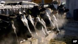 美国爱达荷州的一座奶牛场