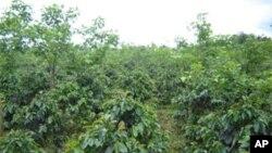 Luta pela posse de terra continua a agravar-se em Benguela