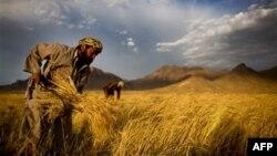 ООН: Світові ціни на харчі зросли до рекордного рівня