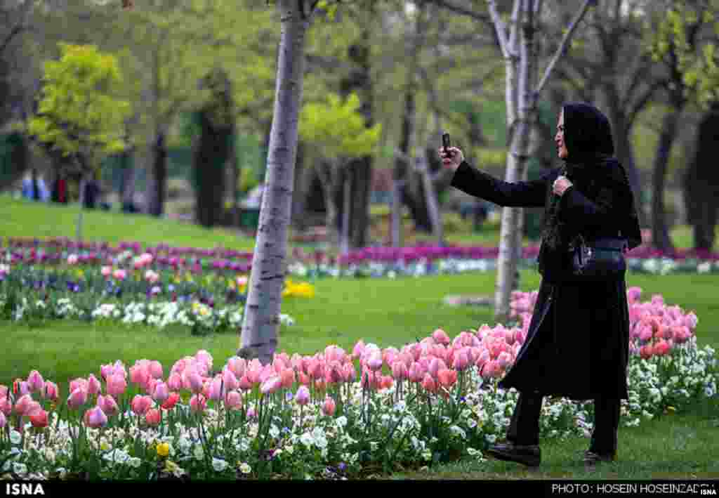 لاله ها میهمان بهاری پارک ملت مشهد. عکس: حسین حسین زاده، ایسنا