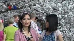 Festival Bunga Sakura 2013 (1) - Dunia Kita