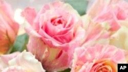 คุณ Cindy Hicks ผู้เชียวชาญด้านการจัดดอกไม้ ชาวมิชิแกน อธิบายถึงการจัดดอกไม้ประดับพิธีแต่งงาน