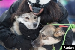 Handler Connie LaRose hugs the sled dogs before the official start of the 2015 Iditarod Trail Sled Dog race in Fairbanks, Alaska, March 9, 2015.