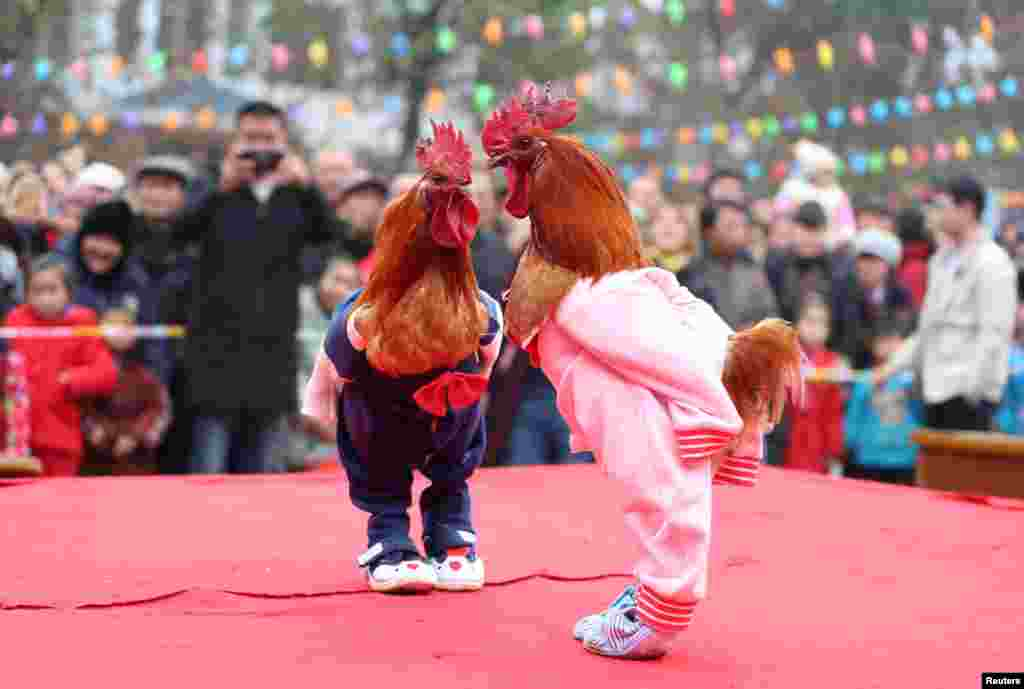 Roosters dressed up in costumes are on display during a local chicken beauty pageant in Guang'an, Sichuan province, China.