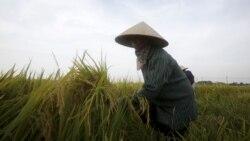 Tin Việt Nam 28/12/2016