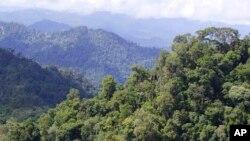 Hutan hujan tropis di Sarawak, Kamis, 13 Desember 2007.