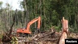 Hutan yang dirusak di wilayah lahan gambut, Kuala Tripa di Nagan Raya, Aceh. (Foto: Dok)
